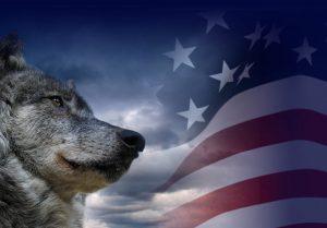 Siera Lobo Wolf